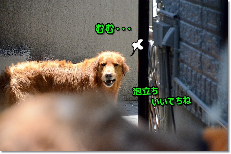 DSC_8389.jpg