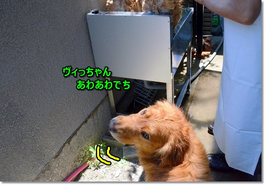 DSC_8397.jpg