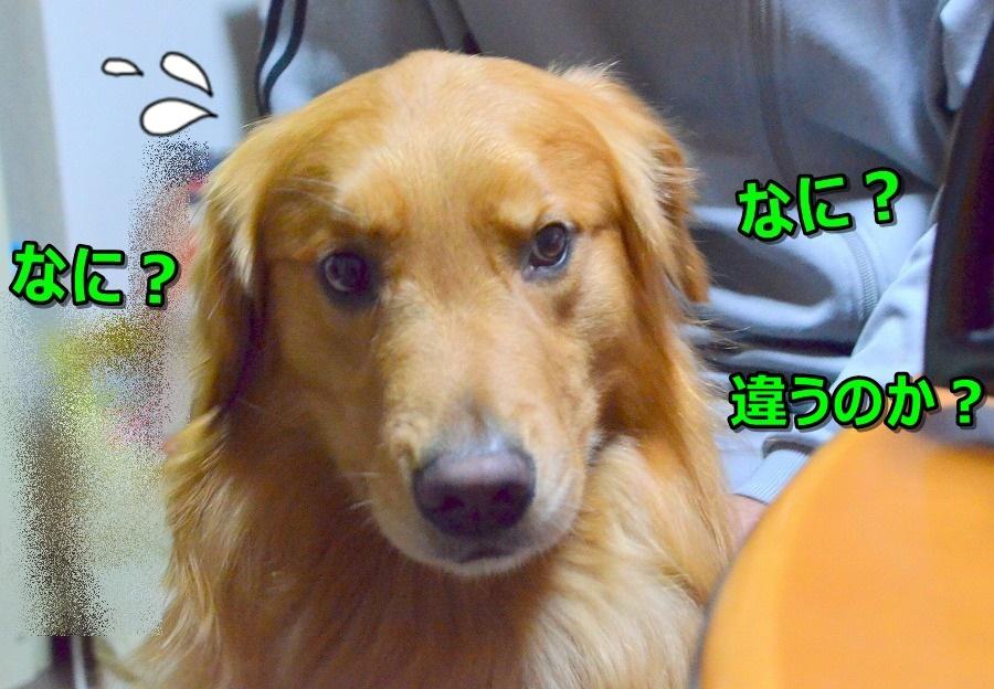 DSC_8647_20150612093925d70.jpg