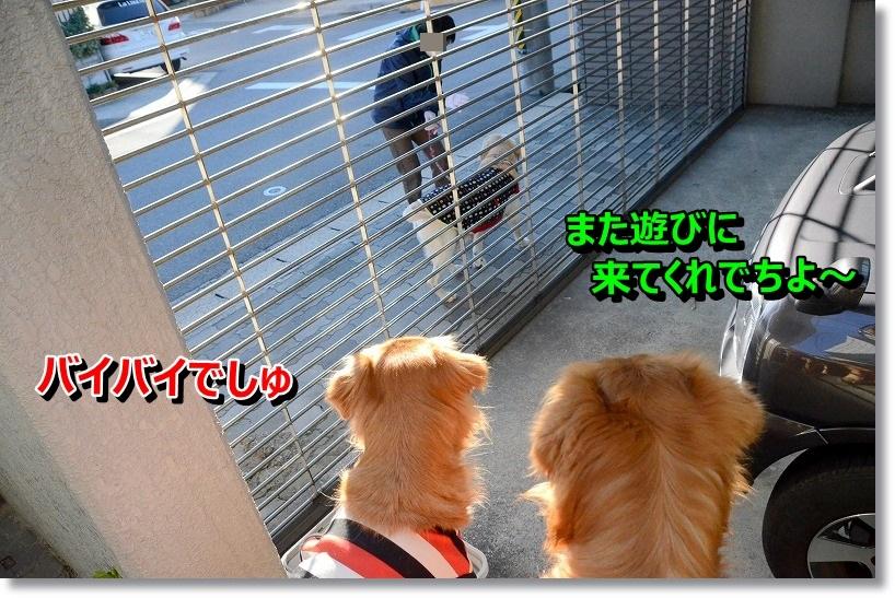 DSC_8799_20141226191503bd0.jpg