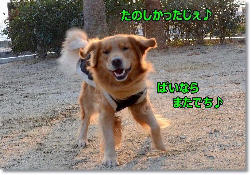 DSC_9014_20150216230757713.jpg