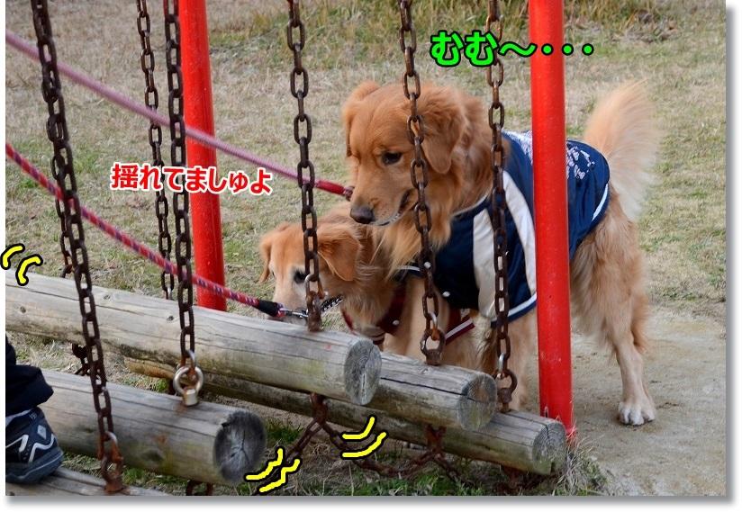 DSC_9249_20150105115748a66.jpg