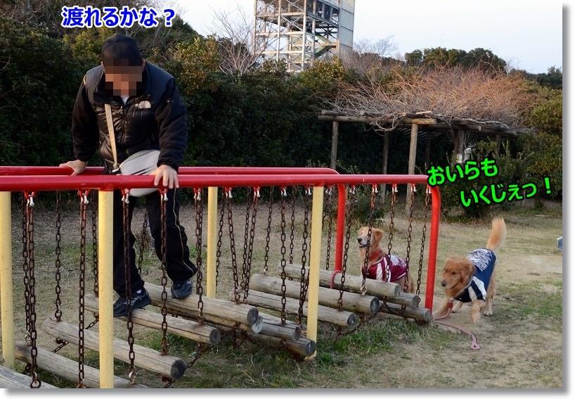DSC_9266_2015010511580304e.jpg