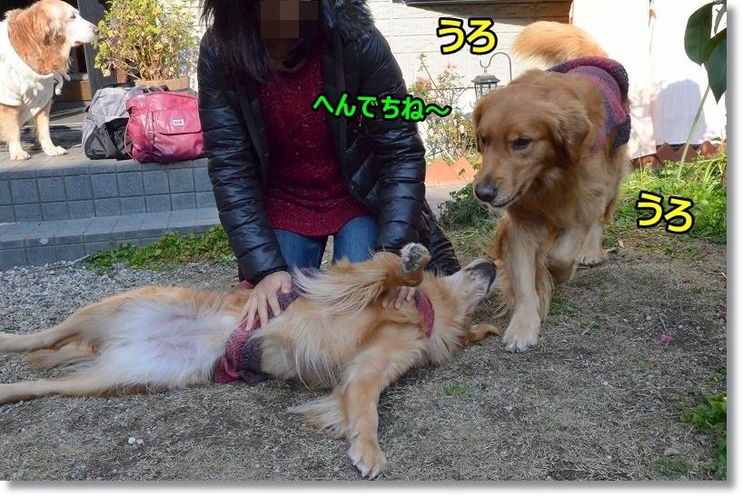 DSC_9619_2015012910251892d.jpg