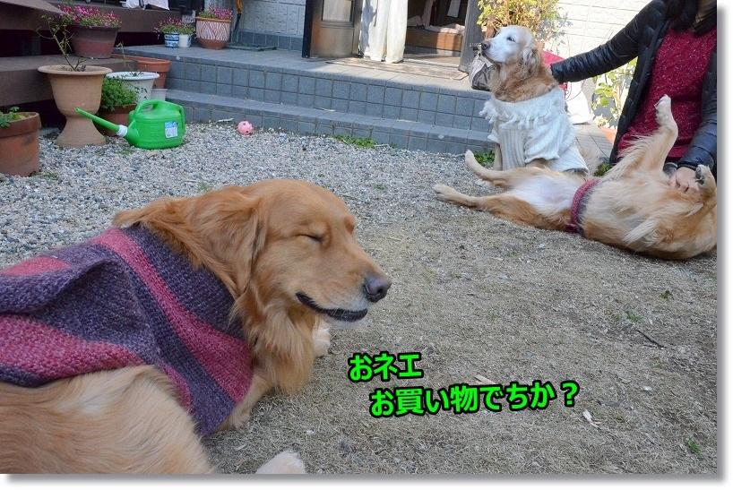 DSC_9627_20150129105848bde.jpg