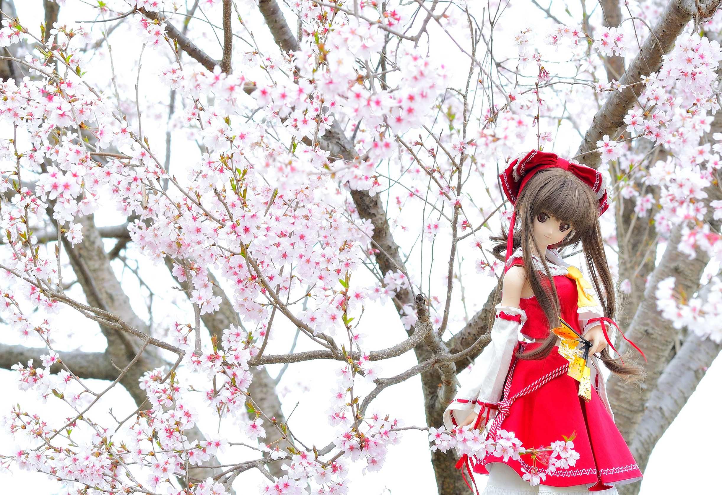 おしゃれ宇宙人blog 【ドール】 実家に植えた桜が満開です 【2015】