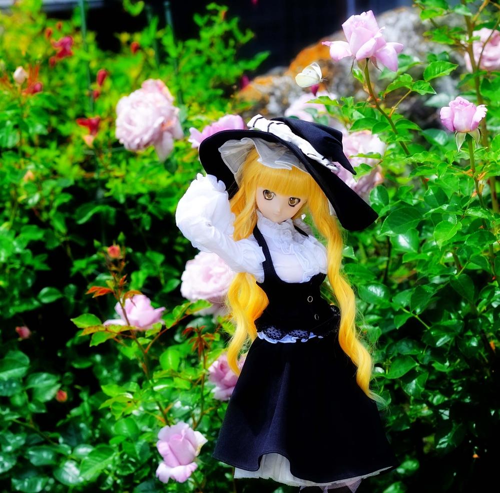 DSC_0024aa_20150524141243831.jpg