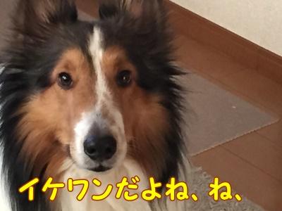 1fc2blog_201504042041369ed.jpg