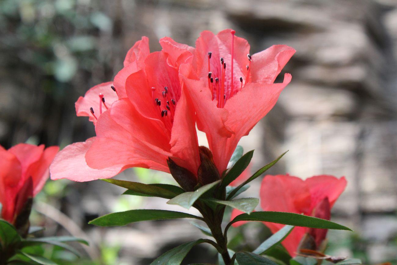 ●S2015・3・17植物園_30