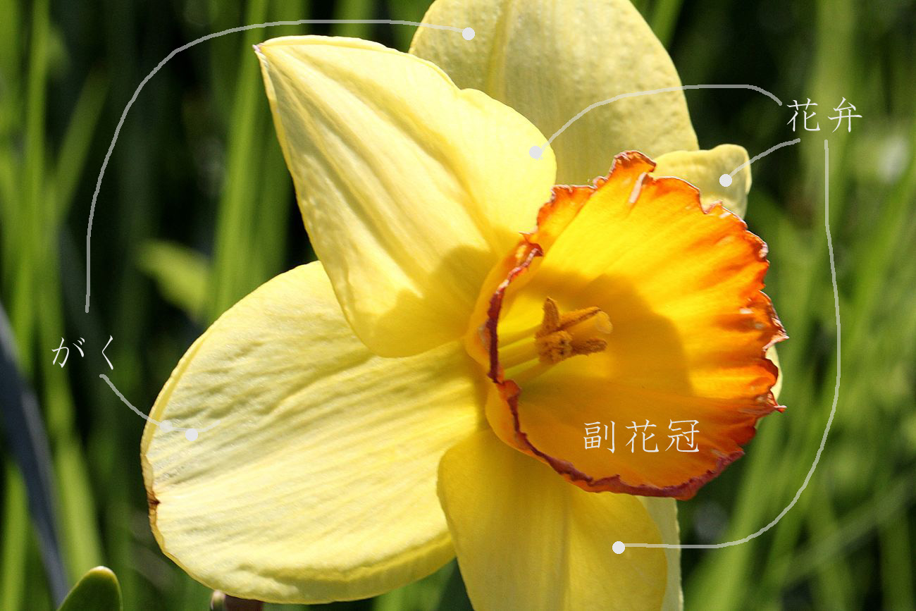 ●SPAB2015・4・23新津川園_49
