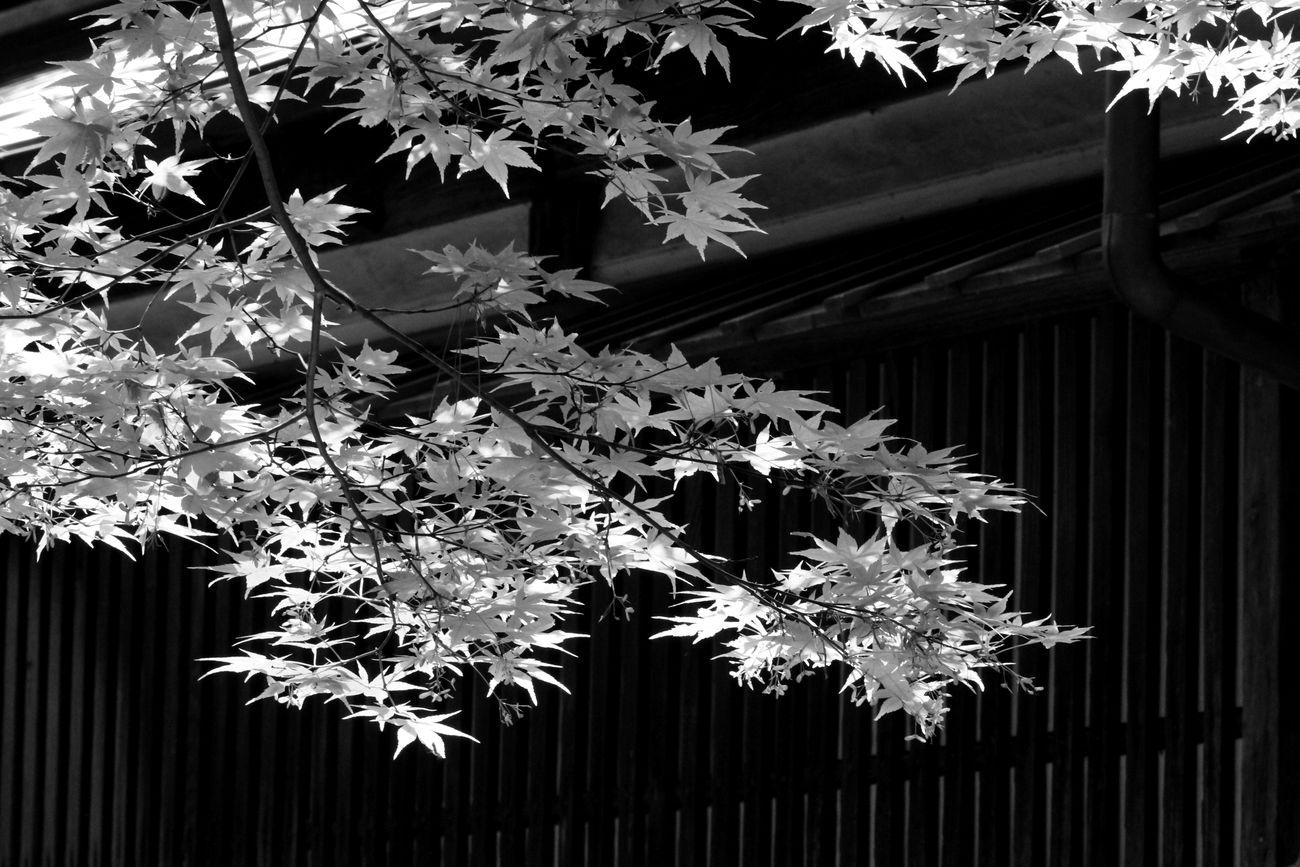 ●S黒2015・5・7清水園D_46