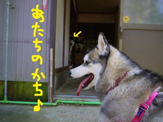 P1690271.jpg