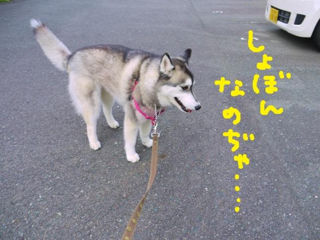 P1700467.jpg