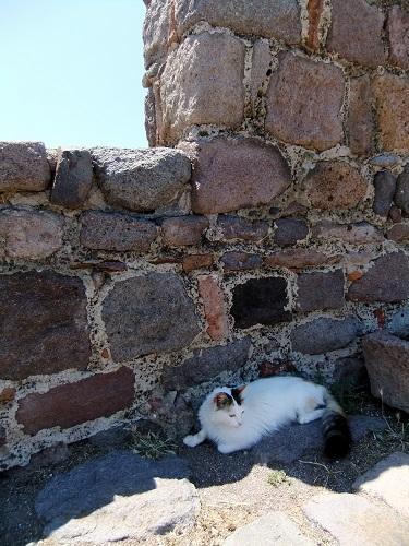 モリヴォス_カストロの猫さん (1)
