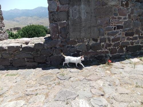 モリヴォス_カストロの猫さん (2)