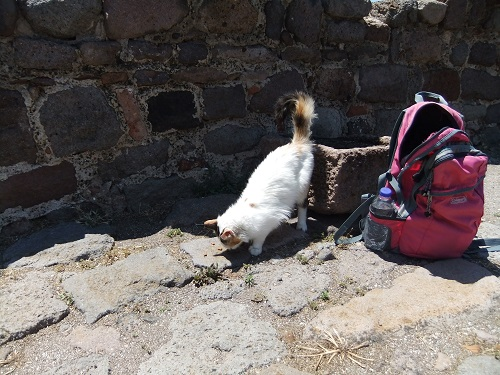 モリヴォス_カストロの猫さん (3)