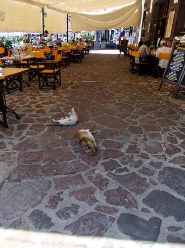 モリヴォス_のんびり猫さん