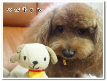 ルルちゃんとおもちゃのワンワン