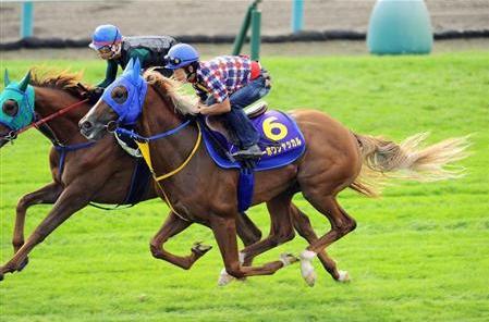 酒井騎手「トーホウジャッカルは次元の違う馬」