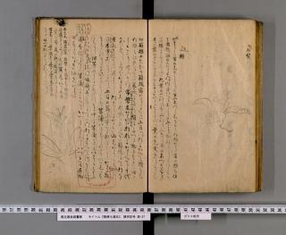 「箱根七湯志」山梨・山樒図