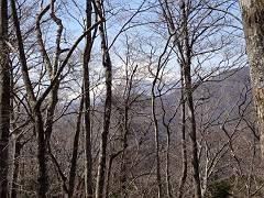 落葉の木々間から富士山も-s