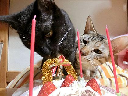 ケーキ好き?