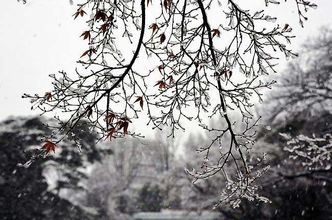 雪が雨に濡れて凍ってます