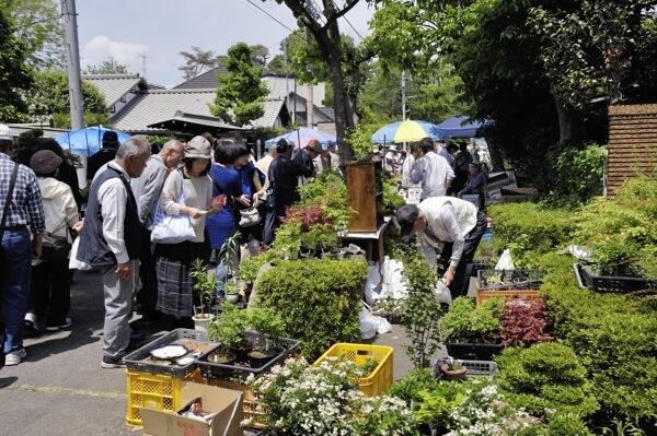 盆栽、人気ありますね。