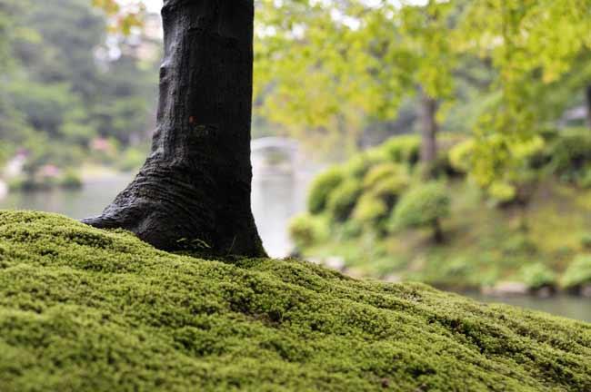 雨にぬれた苔の緑が鮮やかです。