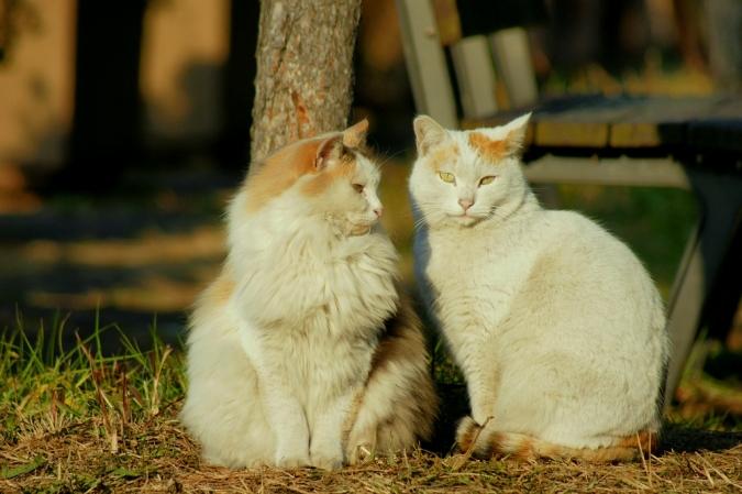 DSC07460猫