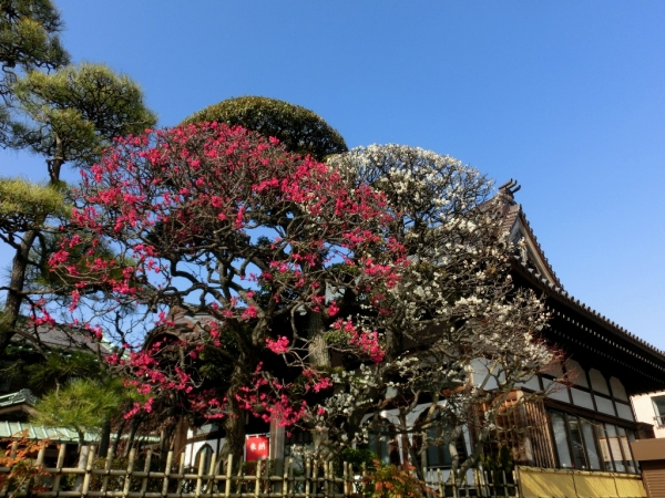 CIMG4346本門寺