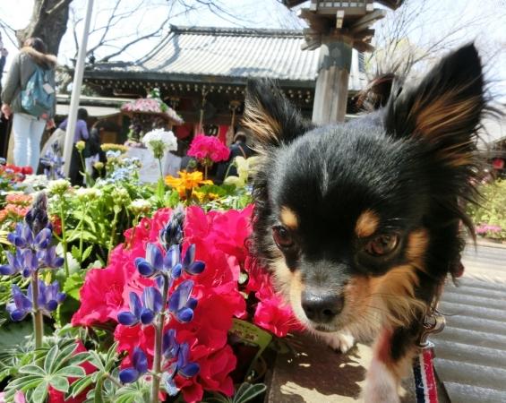 CIMG4490花