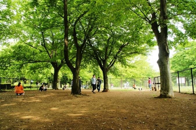 DSC01972加工小金井公園