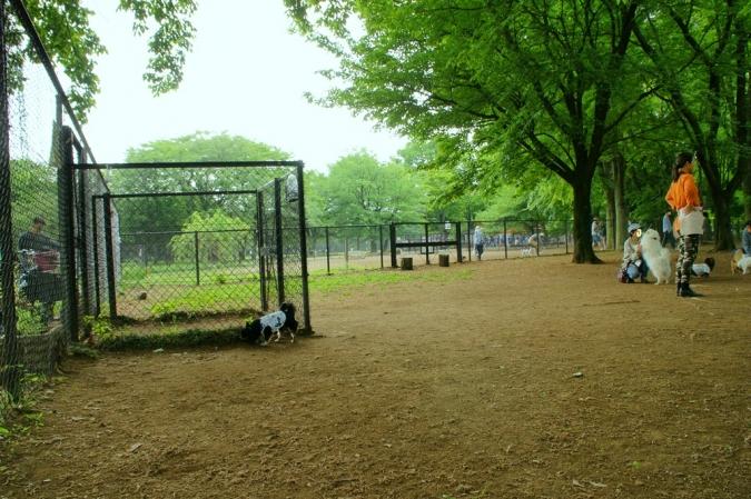 DSC01945加工小金井公園