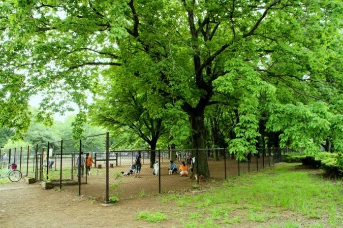 DSC01940小金井公園