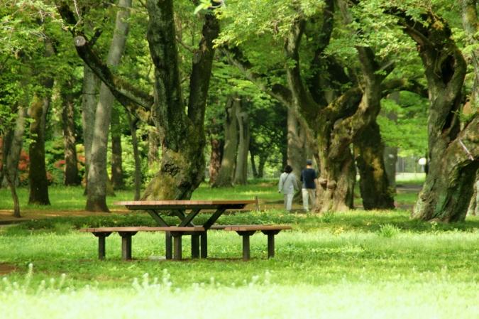 DSC01925小金井公園