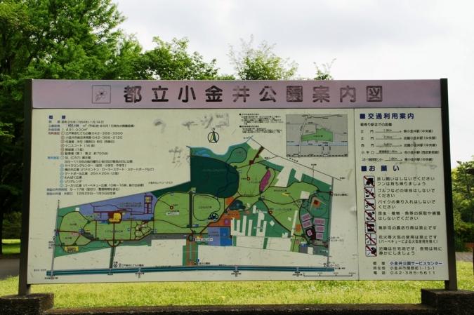 DSC01886小金井公園