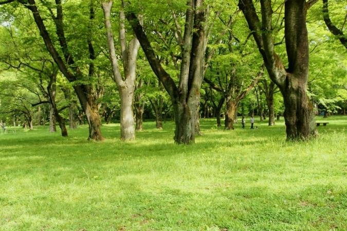 DSC01880小金井公園