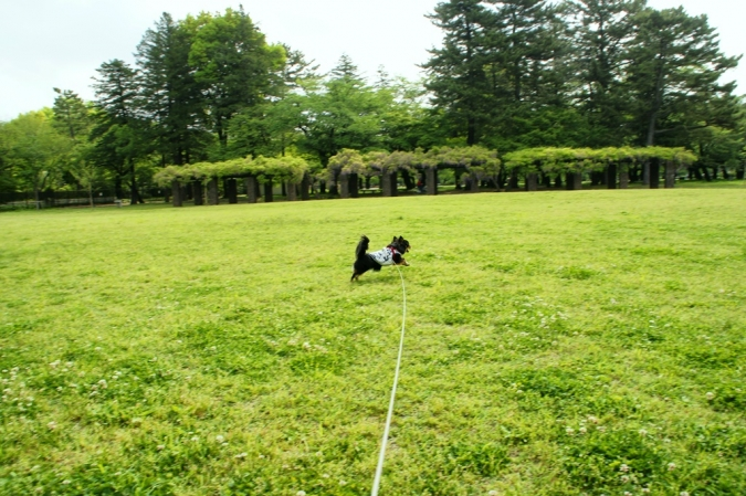 DSC01894小金井公園