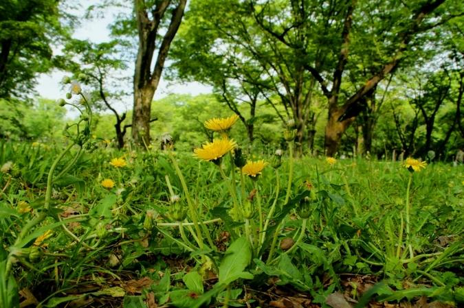DSC01873小金井公園