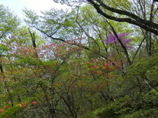茶の木畑峠付近