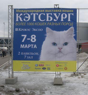 猫展示会01
