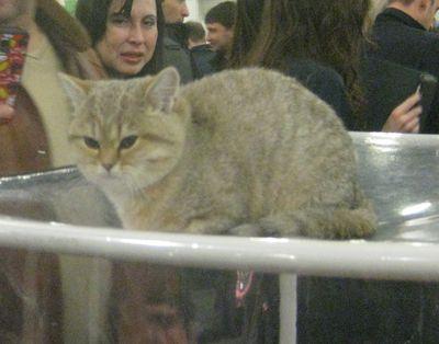 猫展示会05