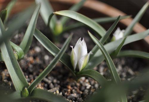 150317_tulip.jpg