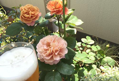 150504_rose_beer.jpg