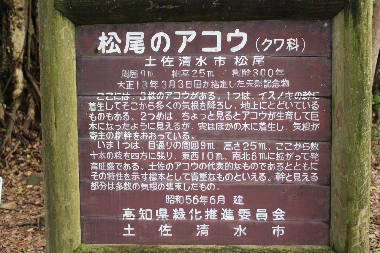 松尾のアコウ-1