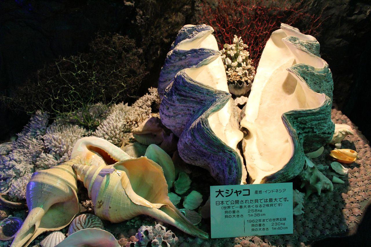 竹島ファンタジー館-12