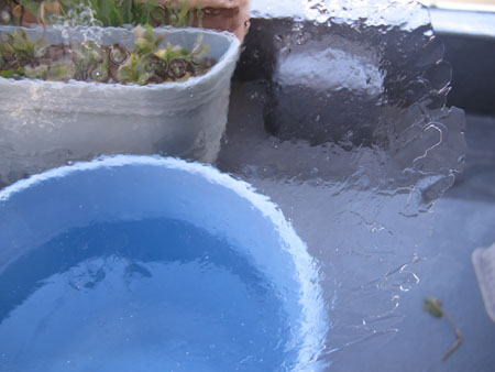 ベランダの氷 3月11日