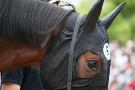 馬の目 2