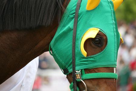 馬の目 4
